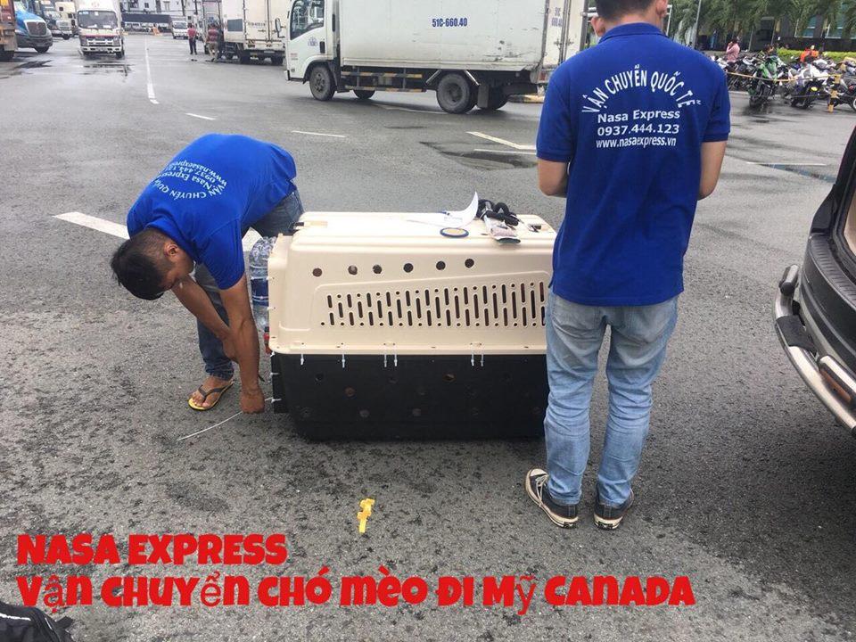 dem chó mèo đi mỹ an toàn nasa express