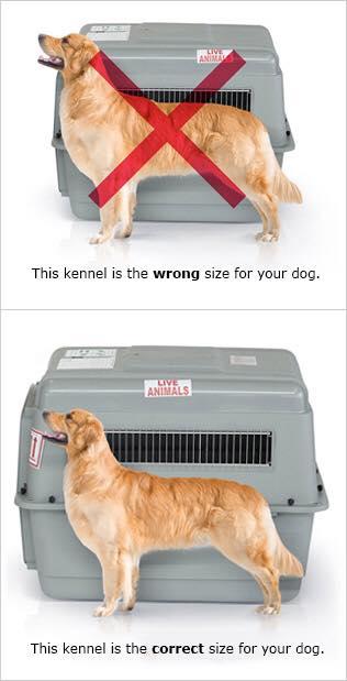 gửi chó đi mỹ